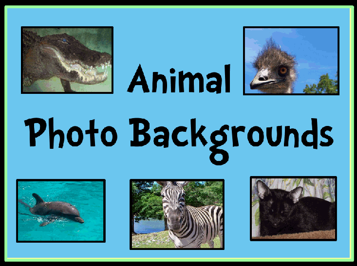 Animal Photograph Backgrounds